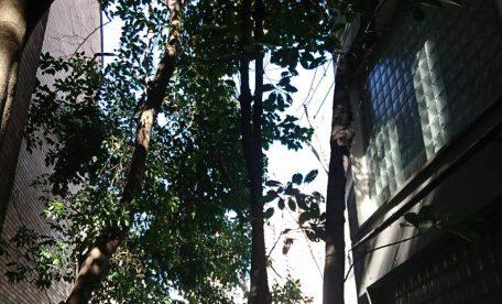 【東京都港区】敷地内高木の剪定 定期管理