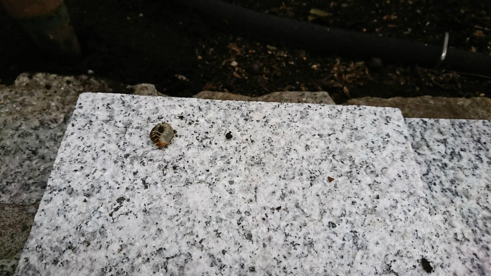 コガネムシの幼虫がいそうなところ2