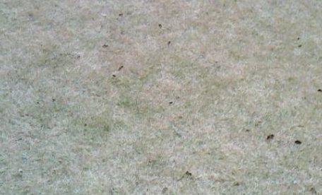 日本芝の管理・お庭のお手入れ・スパイク
