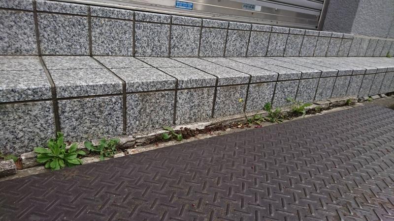 道路の隙間に雑草