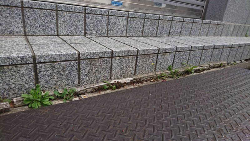 コンクリートのひび割れや舗装の目地から生えてしまう雑草