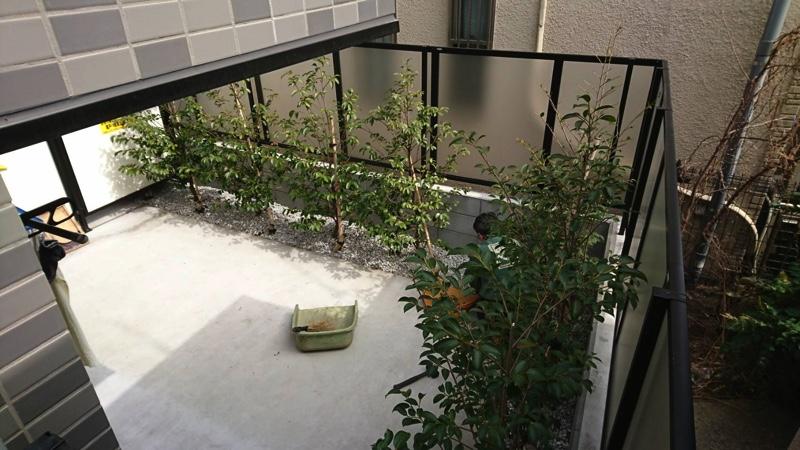 大田区東蒲田「大田区緑の条例」マンションの緑地帯4