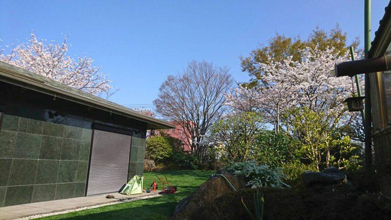 東京都大田区・植木屋・西洋芝の育成と管理