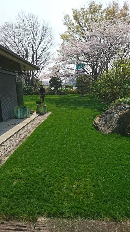 東京都大田区・植木屋・西洋芝の育成と管理4