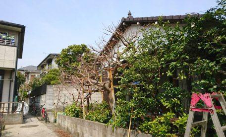 【横浜市北区師岡町】庭木の剪定・植木屋after