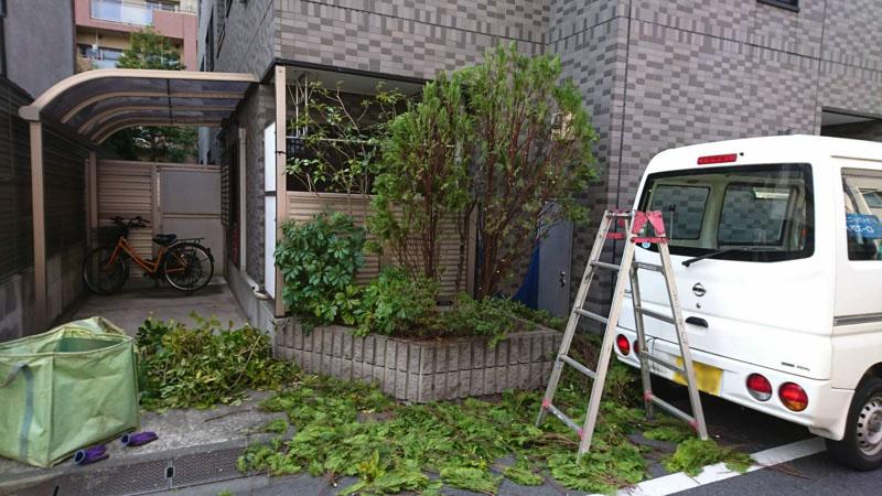 東京都大田区仲六郷にてマンション・植木・剪定の様子6