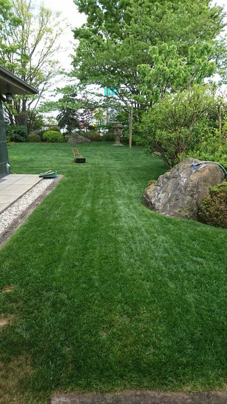 東京都大田区・植木屋にて行った西洋芝の育成と管理・お庭のお手入れの様子2