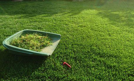 東京都大田区・植木屋にて行った西洋芝の育成と管理・お庭のお手入れの様子