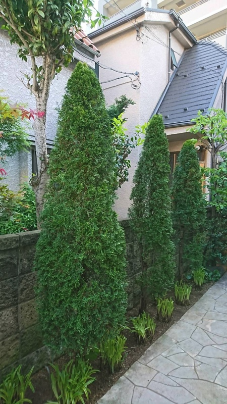 大田区の住宅の庭木の剪定・お庭のお手入れ、さっぱりと剪定