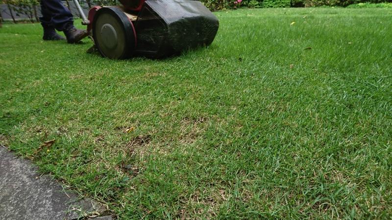 エンジン芝刈機による刈り込み。