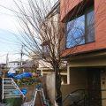 【東京都大田区】庭木の伐採/抜根・施工例