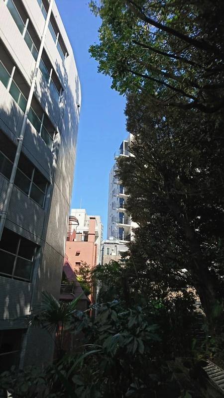 東京にて越境枝下ろし・高所作業をしました。